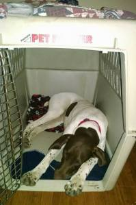 Paige feels safe in her kennel.